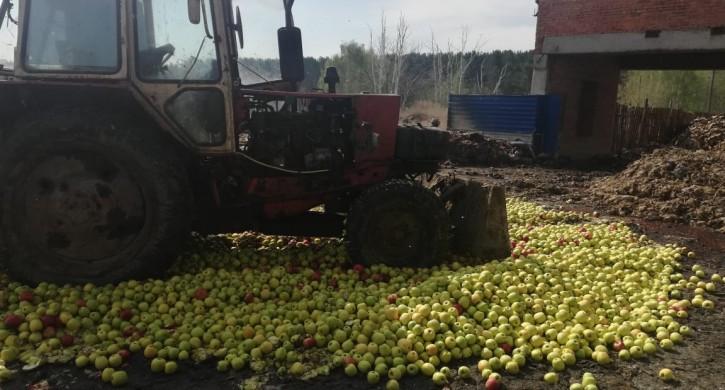 В Увельском уничтожили 20 тонн яблок